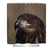 Eagle Beauty Shower Curtain