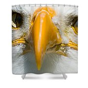 Eagle Eyes Shower Curtain
