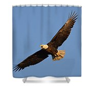 Eagle Flight 5 Shower Curtain