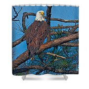 Eagle In Oil Shower Curtain