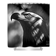 Eagle In Shadows Shower Curtain
