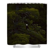 Eagle In The Green Shower Curtain