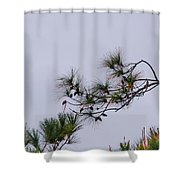 Eagle In The Pines Shower Curtain