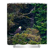 Eagle In Trees  Shower Curtain