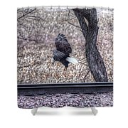 Eagle Landing 2 Shower Curtain