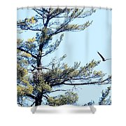 Eagle Nest Shower Curtain