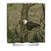Eagle On A Tree Branch Shower Curtain