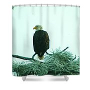 Eagle On A Frozen Pine Shower Curtain by Jeff Swan
