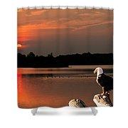Eagle On Stump Overlooking Water At Sundown Shower Curtain