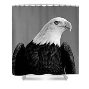 Eagle On Watch Black And White Shower Curtain