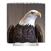 Eagle On Watch Shower Curtain