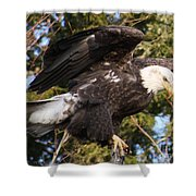 Eagle One Shower Curtain