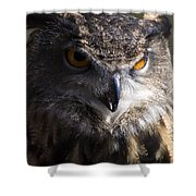 Eagle Owl 2 Shower Curtain