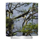 Eagle Pair And Nest Shower Curtain