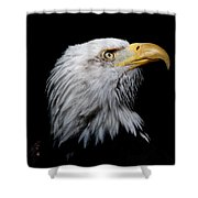 Eagle Portrait II Shower Curtain