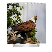Eagle Portrait IIi Shower Curtain