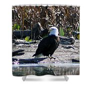 Eagle Posing By Water Shower Curtain