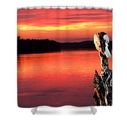 Eagle Preening Early Shower Curtain