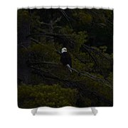 Eagle Splendor Shower Curtain