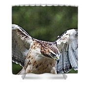 Eagle Wings Shower Curtain