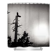 Eagles And Old Tree In Sunset Silhouette Shower Curtain