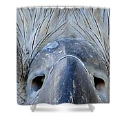 Eagle's Eyes Shower Curtain
