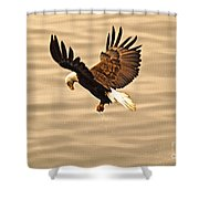 Eagles Pause Shower Curtain by Skye Ryan-Evans