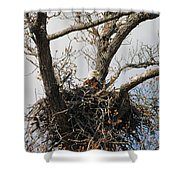 Eagles Watchful Eye 2 Shower Curtain