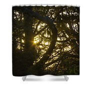 Ear Drum Shower Curtain
