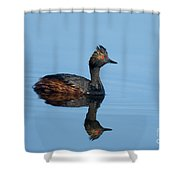 Eared Grebe Podiceps Nigricollis Shower Curtain