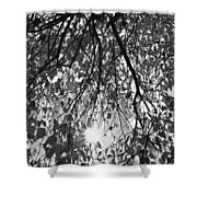 Early Autumn Monochrome Shower Curtain