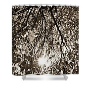 Early Autumn Sepia Shower Curtain