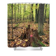Early Autumn Woods Shower Curtain