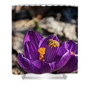 Early Bee Shower Curtain