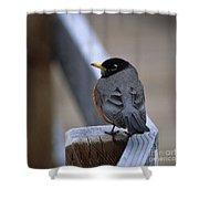 Early Bird Shower Curtain