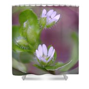 Early Blossoms  Shower Curtain