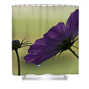 Early Dawns Light On Fall Flowers 01 Shower Curtain