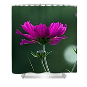 Early Dawns Light On Fall Flowers 03 Shower Curtain