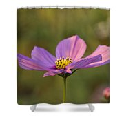 Early Dawns Light On Fall Flowers 05 Shower Curtain