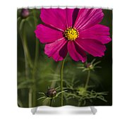 Early Dawns Light On Fall Flowers V 03 Shower Curtain