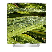 Early Dew Shower Curtain