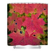 Early Fall Of Norway Maple Shower Curtain