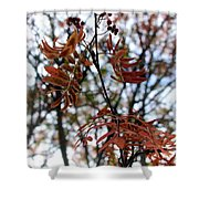 Early Fall Of Rowan Shower Curtain