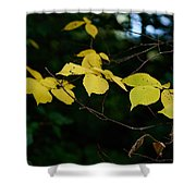 Early Fall Of Wych Elm Shower Curtain