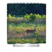 Early Morning Doe Shower Curtain