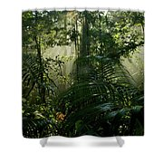 Early Morning Light In The Rain Forest Shower Curtain