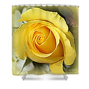 Early Morning Rose Shower Curtain