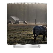 Early Morning Sheep Shower Curtain