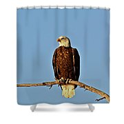 Early Morning Surprise Shower Curtain