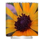 Early Morning Susan Shower Curtain